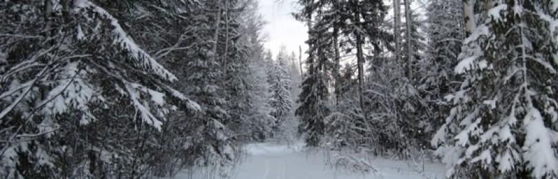 Готовим лес для сруба