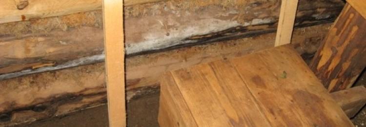 Опыт борьбы с плесенью в деревянной бане