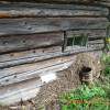 Защита сруба от жуков и короедов