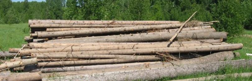 Лес на баню: сколько нужно, чтоб хватило?