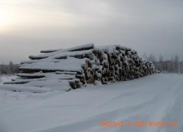 Зимний лес или летний?