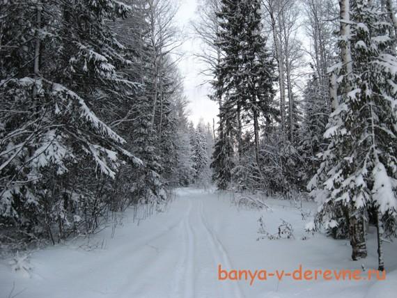 Лучший лес - зимний
